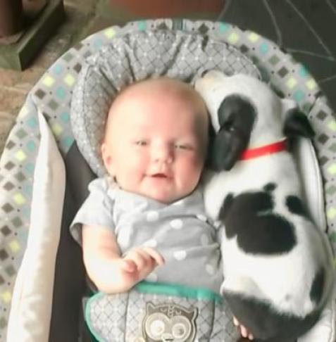 Fotos de un bebe con un cachorrito