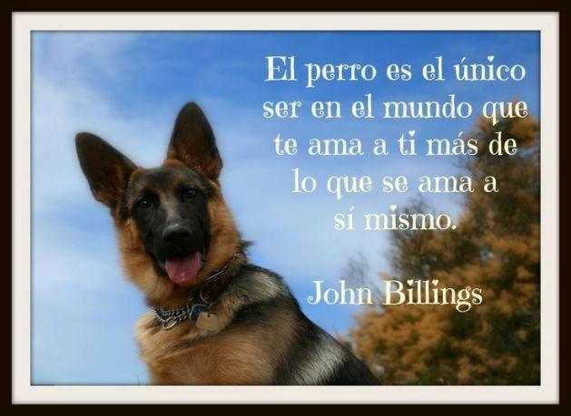 Frases Sobre el amor de un perros para reflexionar
