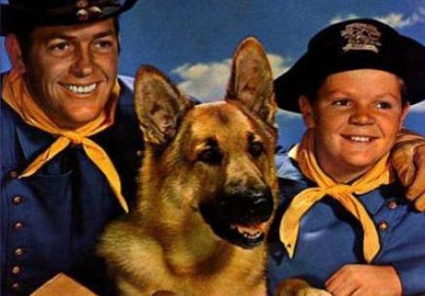 Las razas de perros mas populares en america imagenes