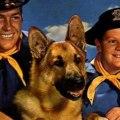 Las 10 Razas De Perros Mas Populares en America