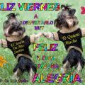 Imagenes de Perros Feliz Viernes