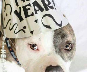 Imagenes De Perros Happy New Year Para Facebook