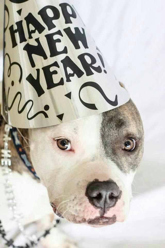 imagenes-de-perros-happy-new-year-para-facebook