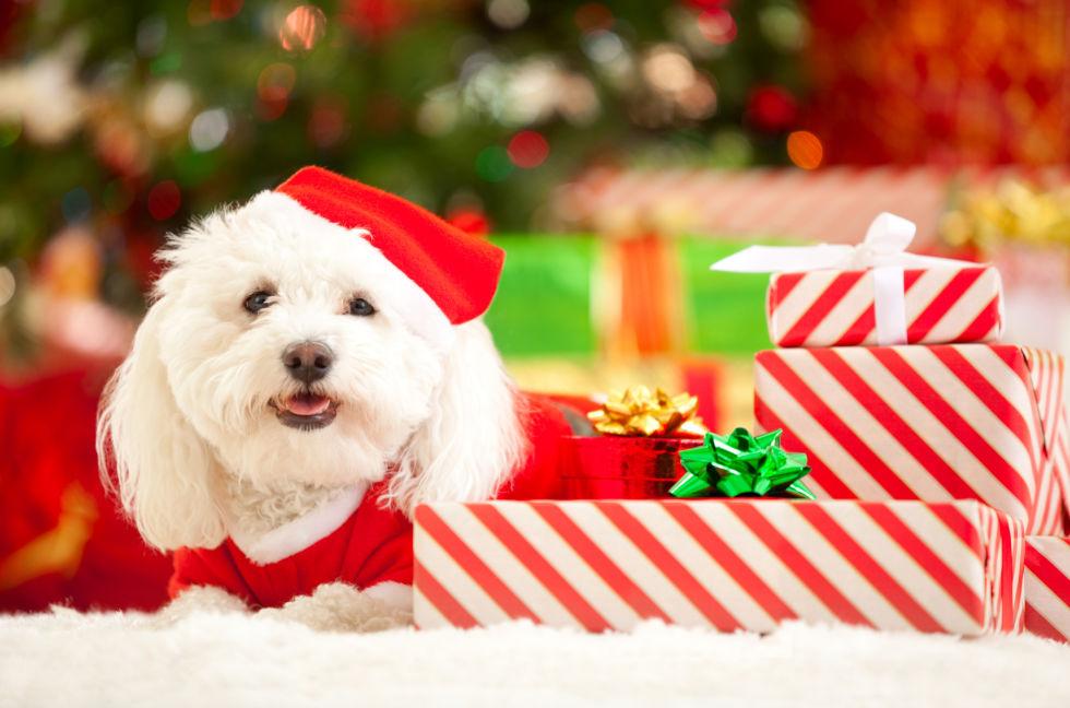 Imagenes Lindas Para Fondo De Pantalla Animada: Fondos De Pantalla Navideños De Perritos Para Descargar