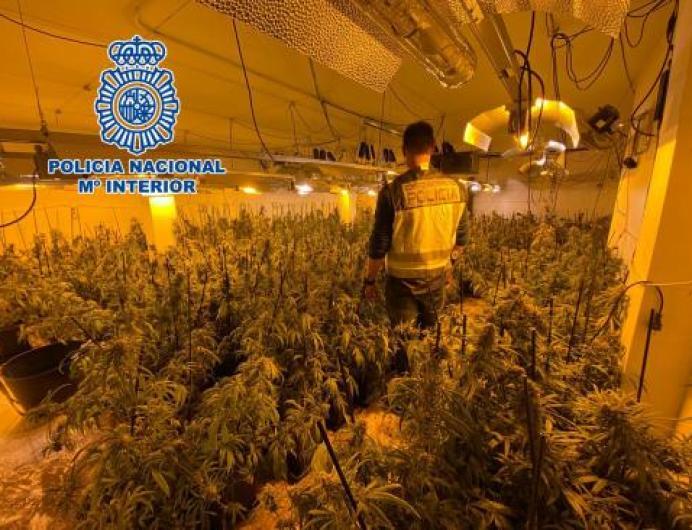 Marihuana - Últimas noticias de Marihuana en 20minutos.es