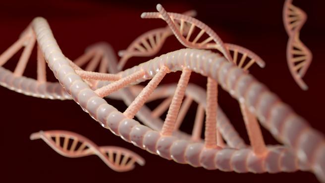 El objetivo del estudio era recoger muestras de ADN sin invadir el hábitat de los animales.