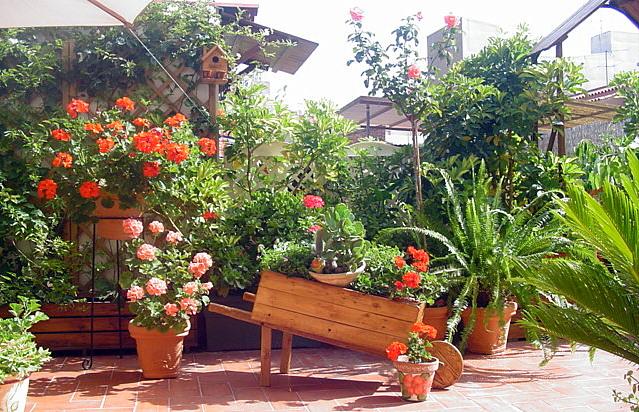 Mi querido patio