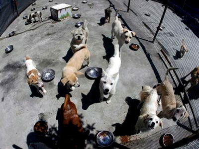 Madrid prohíbe dar de comer a los animales abandonados