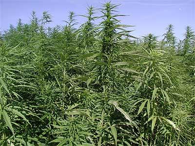 La localidad de Rasquera en Tarragona recibirá 1,3 millones de euros por ceder parcelas para la plantación de esta planta.