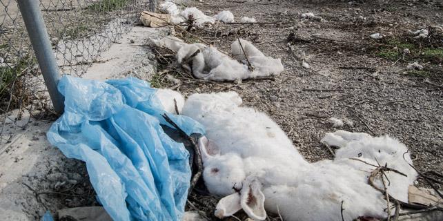 Conejos muertos a la intemperie en la granja que IA identifica como 'Granja Cunícola Alvi' de Belianes, Lleida. IGUALDAD ANIMAL.
