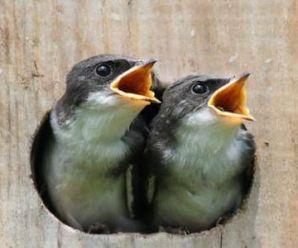 Imagenes De Aves Bebes