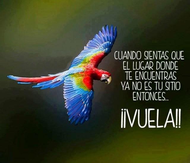 Imagenes De Aves  Con Frases Y Reflexiones Sobre Motivacion y Superacion  Para Compartir