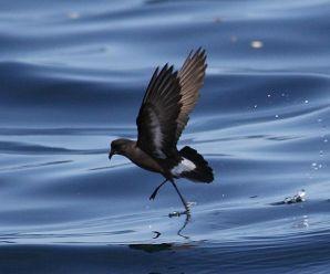Imagenes De Petreles Aves Marinas