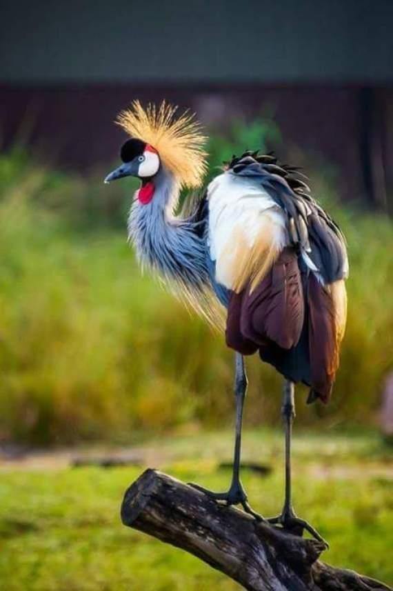 Fotos De Aves Bonitas Y Extrañas
