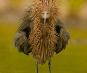 Imagenes de Aves Raras Y Extrañas