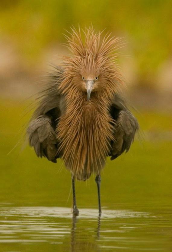 Imagenes de Aves Raras