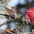 Descargar Imagenes De Colibries Con Flores Para El Celular