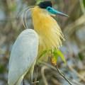 Fotos De Aves Extrañas Del Mundo