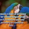 Imagenes De Loros Con Frases De Amor Para Facebook