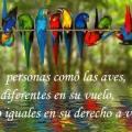 Imagenes de Guacamayas y Loros Con Frases Y Reflexiones Para WhatsApp