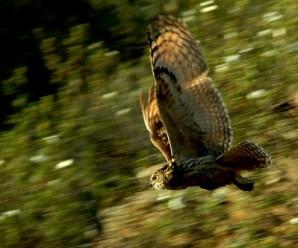 Imágenes De Pájaros Bonitos Volando
