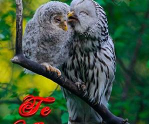 Imagenes De Aves Te Amo Para Dedicar
