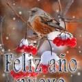 Feliz Año Nuevo En Imagenes De Aves Para Descargar