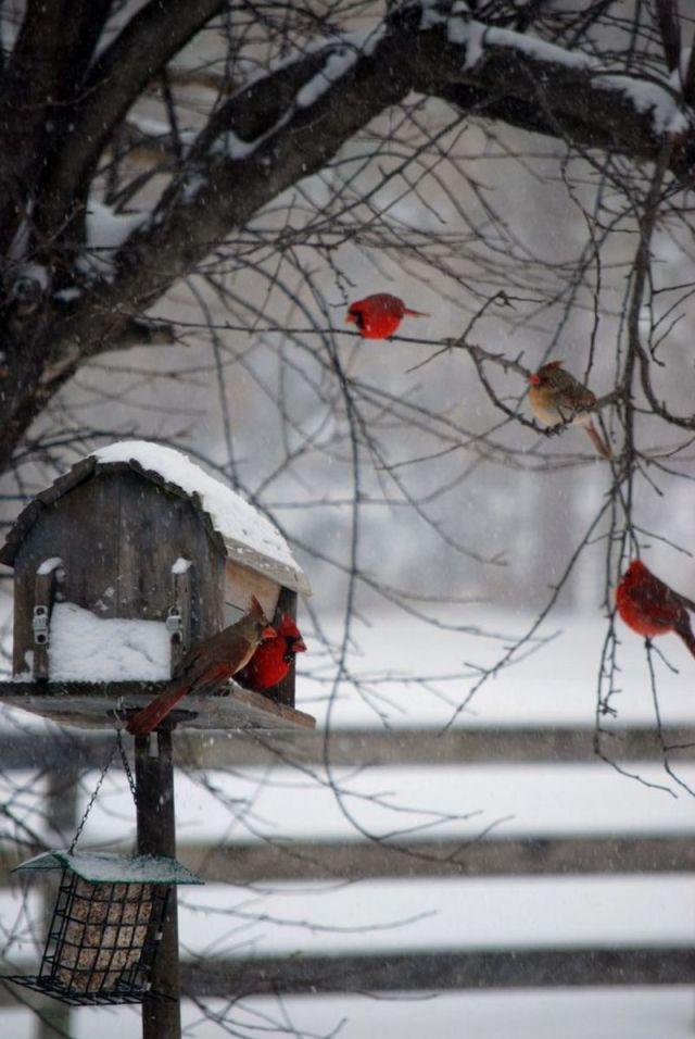 fondos-de-celulares-navidenos-con-aves