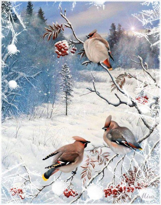 imagenes-navidenas-de-aves-para-fondo-de-whatsapp
