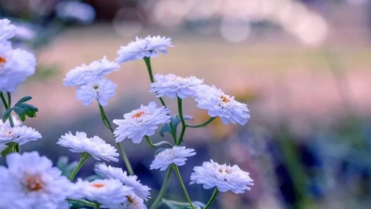 Imgenes De Flores Bonitas Para Fondo De Pantalla