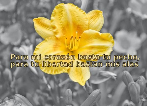Imagenes de Flores Con Versos De Amor