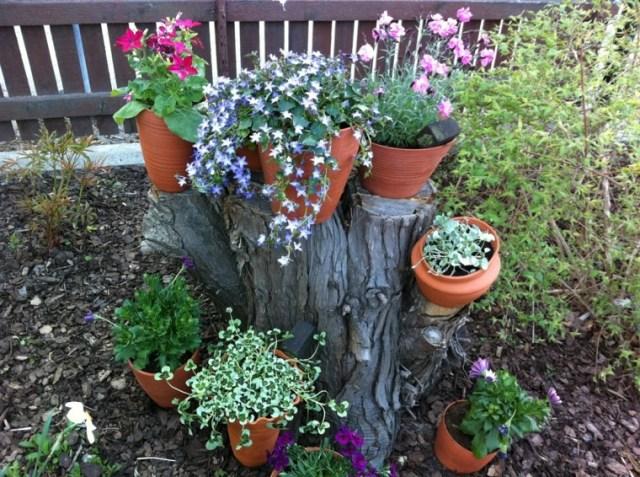 Flores bonitas en el en un tronco para decorar el jardin