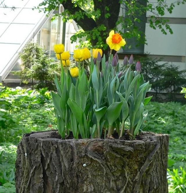 Flores bonitas sembradas en un tronco