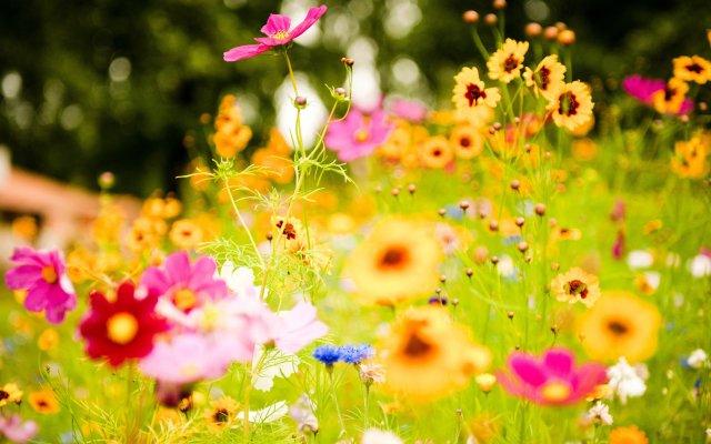 Fondo de pantalla campo de flores