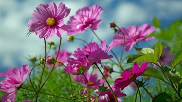 Fondos de pantalla de flores gratis