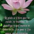 Imagen De Una Bella Flor Con Mensaje Para Desear Buenas Noches