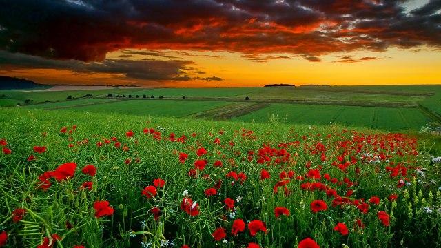 Imagen Para Fondo de Escritorio de un capo de flores