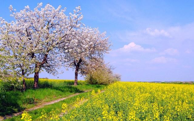 Imagen campo de flores wallpaper