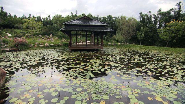 Jardines de Mexico Jardin Ambiente Japones