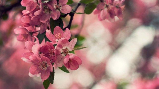 imagen bonita de flores para fondo de escritorio