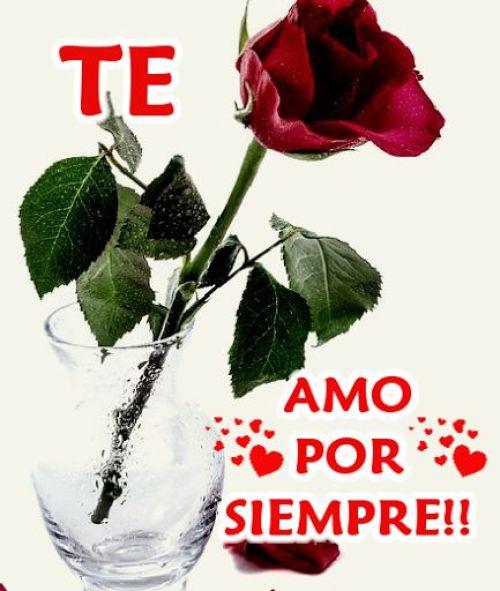 Imagen de una rosa te amo