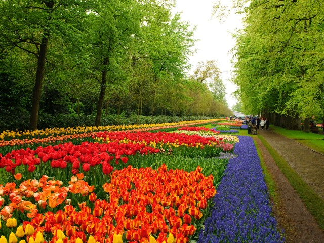 Fotos del jardin Holandes Keukenhof