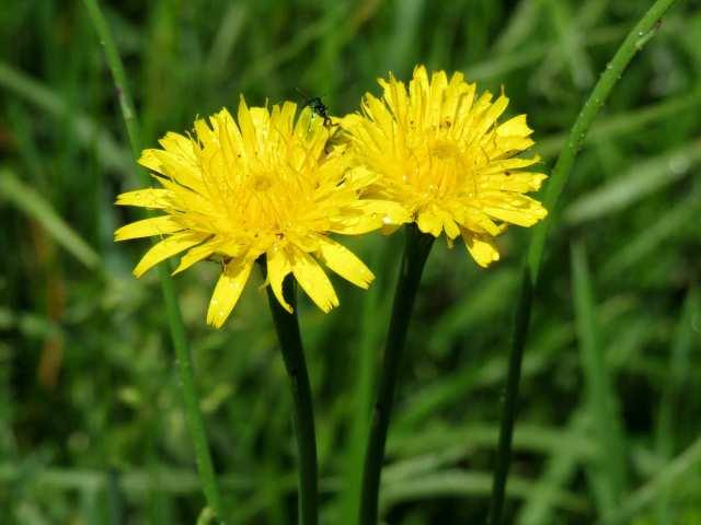 Imagen de flores amarillas para descargar