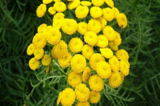 Imagenes de flores amarillas para compartir