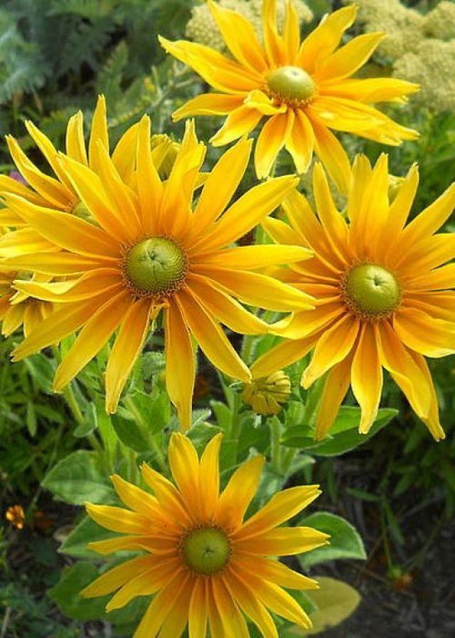 Imagenes de flores amarillas para usar como fondo de celular