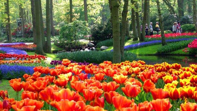 Imagenes de hermosos jardines de tulipanes