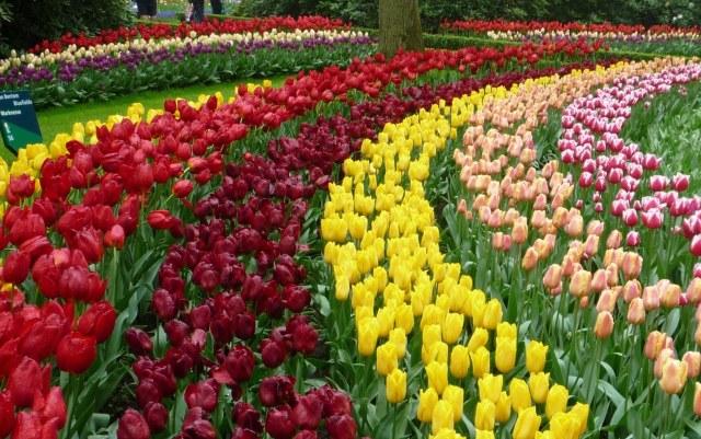 Jardin de tulipanes en Europa