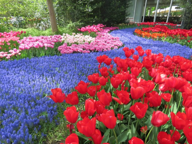 Keukenhof-Jardin de flores