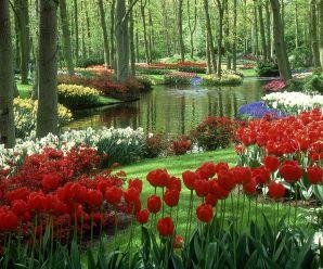Imagenes De Los Jardines de Keukenhof – Países Bajos