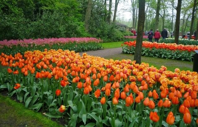 Tulipanes en el jardin de Keukenhof
